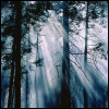 shadow_woods: (Shadow Woods)