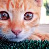 swordage: Kitty cat! (x cat)