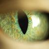 swordage: Green cat eye. (x ff7 eye)