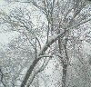 elektra: (snowy tree seen from house snowmaggedon)
