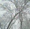 elektra: (snowy tree seen from house snowmaggedon)