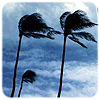 x_storm: (palms blowing)