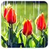 x_storm: (tulips in rain)