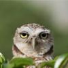 benedict: (owl unamused)