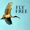 margaret_r: (Fly Free)
