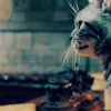 dueltastic: Image: McGonagall's cat form. (you're a kitty!)