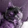 venturous: (purple cat)