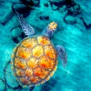 umadoshi: (sea turtle 01 (totaldevotion))