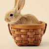 ext_59059: bunny in a basket (Default)