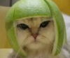 dee_burris: (cat with lime)