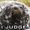 sunnymodffa: picture of a stern looking seal (Seal of Judgement)