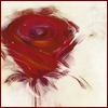 arthorse: (роза)