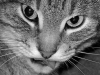 norma_nait: (Cat)