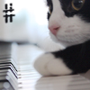 pepper: Cat playing a piano (Kat sharp)