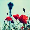 fenwench: (Poppies)