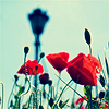 heroides: (Poppies)