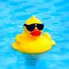 marny_h96: (rubber duck)