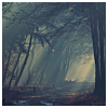 mortalcity: Slanting light in a misty gray forest. (OaS | DMA: Kilgate)