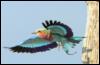 zeccy: (bird)