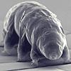 hope: (tardigrade)