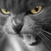 terkat: (Как я зол! (с))