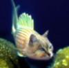 kisochka_yu: (fish)