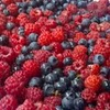 ext_627251: (berries)