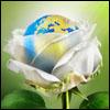 pollyn: (Мир)