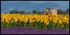 violetrose1922: (Default)