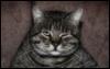 varera: (кот)