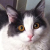 katiejensen: a picture of my cat staring wide-eyed at the camera (pic#8839263)