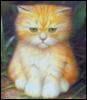 tanda_mif_chgk: (рыжий котик)