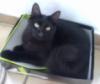 arwym: My cat Blackie in a box. R.I.P., Blackie. :( (black cat)
