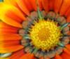 olianemova: (flower)