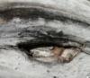 olianemova: (eye)
