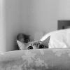 mistyzeo: (default cat)