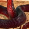 nagaxel: (snake)