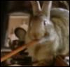 pen_rabbit: (Rabbit with a pen)