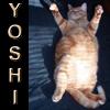 akk: (Yoshi - happy)