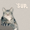 telesilla: a cat leaning against a table, text: 'sup ('sup kitteh)
