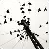 liseuse: (birds)