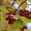 mommyrox: (autumn leaves)