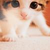verasteine: kitten ((gen) kitten)