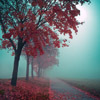 aftondays: (foggy fall)