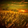 aftondays: (sunlit field)