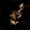 black_cat_hivemind: (creepy cat)
