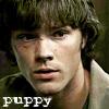 jessm78: (SPN: Puppy Sam from ELAC)