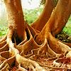 audiobiblio: (Tree roots)