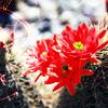 audiobiblio: (Flower)