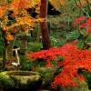 munibunny: (kyoto garden)